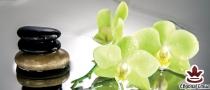 фототапет панел с прекрасни зелени орхидеи и спа камъни