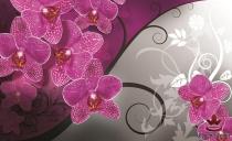 фототапети с цикламени орхидеи и сиво