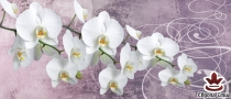 фототапет панел с красиви бели орхидеи на лилав фон