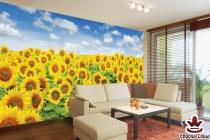 Фототапети макси поле от слънчогледи