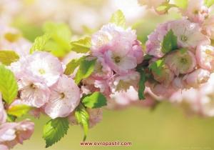 фототапет с цветя розов