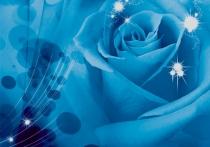 фототапет голяма синя роза