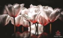 фототапети красиви лалета в червеникаво