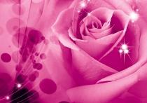 фототапет голяма розова роза