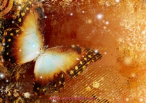 фототапети с голяма пеперуда в оранжево