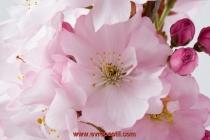 фототапети големи розови цветя