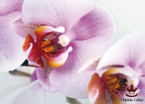 фототапети постер с лилави орхидеи
