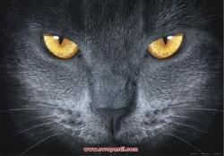 fototapeti-cherna kotka