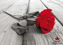 постер червена роза