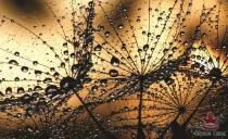 фототапети водни капки в златисто