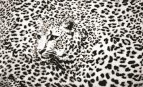 стена ефект леопард в сиво
