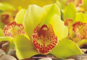 фототапет орхидея в розово и зелено