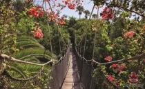 фото тапет с въжен мост и цветя