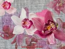 fototapeti orhidei