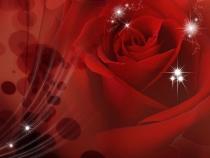 фототапет червена голяма роза