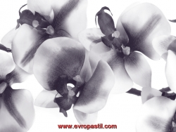фототапети орхидеи чернобели