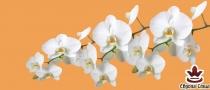 фототапет панел с прекрасни бели орхидеи на оранжев фон