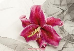 foto tapet голяма розова орхидея