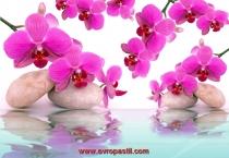 фототапет розови орхидеи